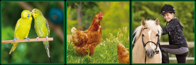 laudi-ternate-varese-mangimi-foraggi-integratori-zootecnici-prodotti-01-1