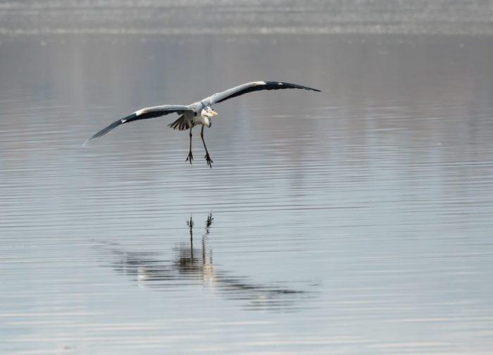 Oasi WWF del Lago di Alviano